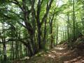 Dans le bois de Rouquié au-dessus du lac de la Raviège