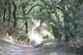 Chemin du tour du lac du Jaunay (rive gauche)