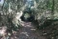 Chemin en descente vers le ruisseau des Coudrières