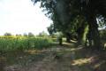 Chemin en direction de Le Vigneau