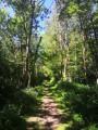 Chemin en forêt le long du Cottey