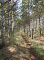 Chemin en sous-bois, variante à la route goudronnée entre les points 3 et 4
