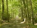 Sentes, chemins creux et bois du côté de Bréval