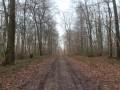 Les bois de Crisolles
