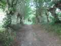 Chemin entre les arbres