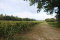 Chemin entre vigne et petit bois