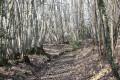 Chemin forestier dans les Bois de Beaussais