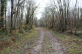 Chemin forestier du Bois Chauvin