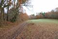 Chemin forestier en bordure de clairière
