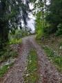 Chemin forestier en direction des chalets de Méry