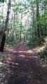 Chemin forestier entre Ste-Marine et Combrit
