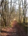 Chemin forestier St Cassien