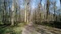 Boucles de Feucherolles et de l'Ouest de la Forêt de Marly