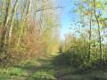 Chemin herbeux le long des arbres