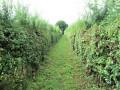 Chemin herbeux