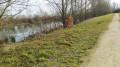 Chemin le long de l'étang sud