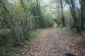 Chemin longeant le Ruban Vert