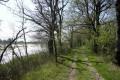 Chemin ombragé au bord de l'étang