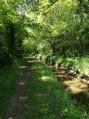 Chemin ombragé au bord de la rigole alimentaire