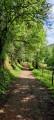 Chemin ombragé
