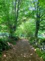Chemin ombragé ...