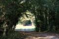 Chemin près de Beaugé amenant au Suin
