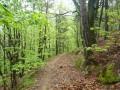 Chemin printanier en sous bois