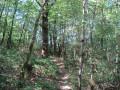 Chemin qui monte dans les bois