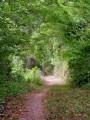 Chemin remontant sur les Feuillets au Moulin de la Dine Jacques