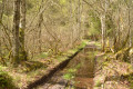 Chemin-ruisseau