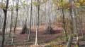 Chemin & sentier de la forêt Verte