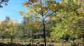 A l'automne, de bien belles couleurs