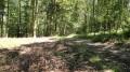 La forêt de Carnelle