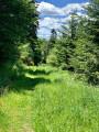 Chemin très herbeux ...