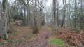 Chemin vers l'étang de Lutché