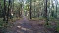 De Saint-Nom à Poissy par les forêts de Marly et des Tailles d'Herbelay