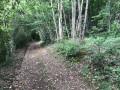 Chemins dans les bois