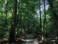 Parcours pour personnes à mobilité réduite, en Forêt de Haguenau