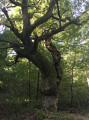 Boucle dans le Sud de la Forêt de Rougeau