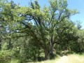 chênes au carrefour point 5