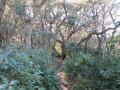 Chênes liège dans la colline Tante Victoire