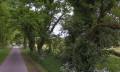 Chênes tortueux de la route de la Distais