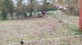 Chevaux près du Moulin