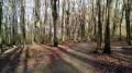 Cimetière forestier