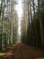 Chemin sous les bois