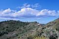 Ciste cotonneux au premier plan et au fond le Coll de la Serra