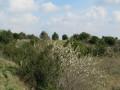 Collines sèches autour du village