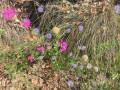 Composition florale!