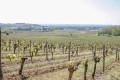 Boucle des coteaux du vignoble Castillonnais à Sainte-Colombe