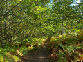 Couleurs d'automne dans la forêt de Montmorency